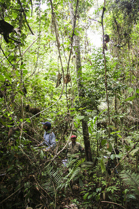 """The Jungle of the Orang Rimba. In the jungle of centre Sumatra still remains a tribe formed by free men and women, living almost in the Stone Age, who face with fear their future. Illegal logging, natural resources shortage due to immigration, culture pollution by """"more developed"""" ethnic groups....problems endured just from 60 years ago."""