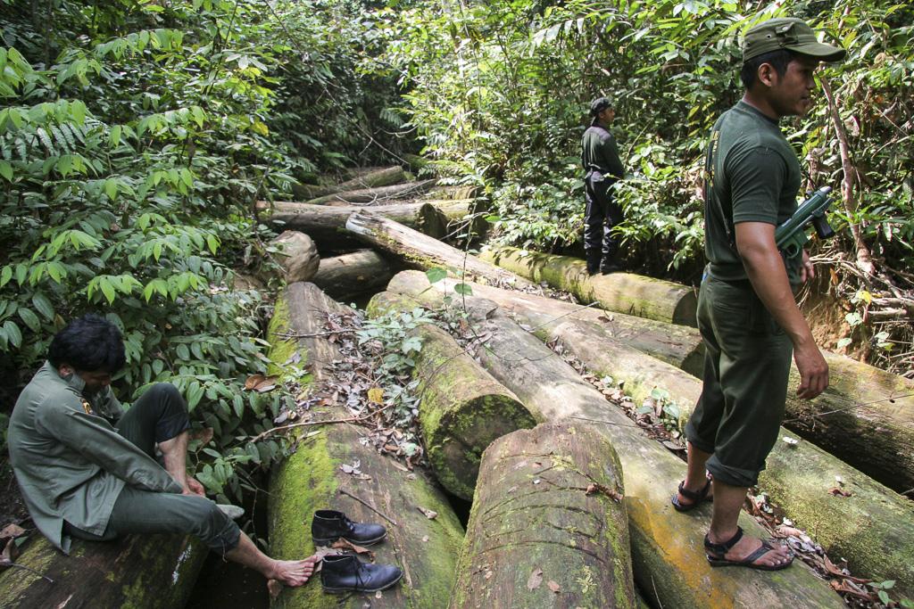 Rangers patrolling in Orang rimba tribe land in a river plenty of illegal logs. Jungle Area of Bukit Duabelas National Park. Jambi province. Sumatra. Indonesia.