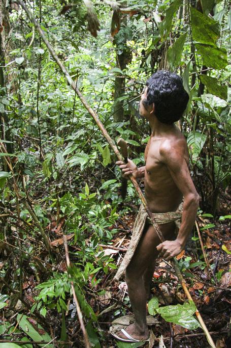 Orang rimba man in the jungle collecting rattan. Jungle Area of Bukit Duabelas National Park. Jambi province. Sumatra. Indonesia.