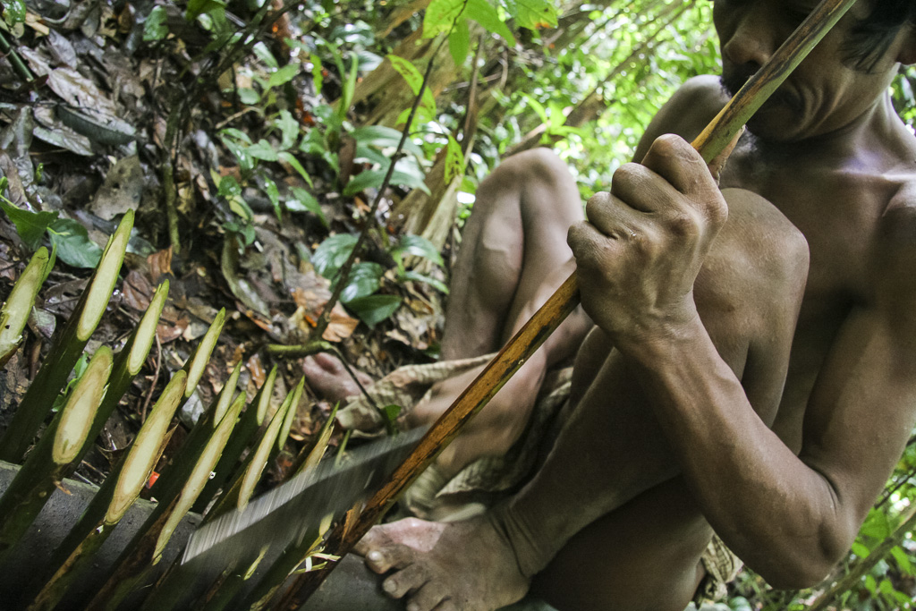 Orang rimba man in the jungle preparing a trap for river rat. Jungle Area of Bukit Duabelas National Park. Jambi province. Sumatra. Indonesia.